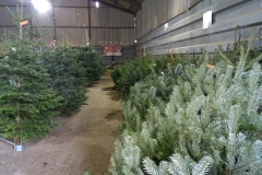 Claydon Christmas Tree Farm